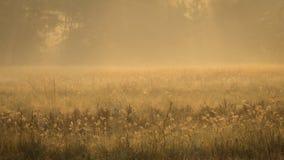 Grasbloem en zonneschijn Royalty-vrije Stock Foto's