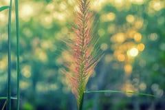 Grasbloem met de aardachtergrond van de groen licht bokeh lente royalty-vrije stock afbeeldingen