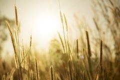 Grasbloem met zonlicht Royalty-vrije Stock Foto