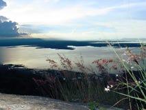 Grasbloem op de berg op het meningspunt stock foto's