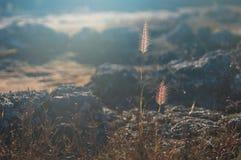 Grasbloemen die op de bergen in de ochtendzon voorkomen royalty-vrije stock afbeelding