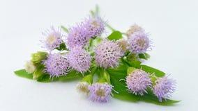 Grasbloemen op witte achtergrond Royalty-vrije Stock Foto