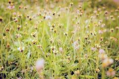 Grasbloemen voor achtergrond Royalty-vrije Stock Afbeeldingen