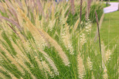 Grasbloemen in zonlicht Royalty-vrije Stock Foto's