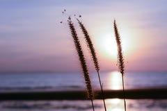 Grasblume mit Sonnenunterganghintergrund Lizenzfreies Stockbild
