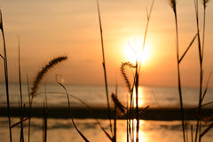 Grasblume mit Sonnenunterganghintergrund Lizenzfreie Stockbilder