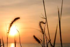 Grasblume mit Sonnenunterganghintergrund Stockfoto