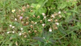 Grasblumen Stockbilder