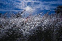 Grasblumen Stockfoto