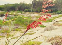 Grasblumen auf Felsen Lizenzfreies Stockbild