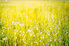 Grasblumen in den medows Lizenzfreies Stockbild