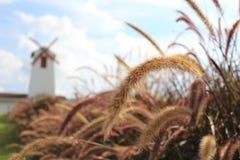 Grasblumen in der Natur Stockbild
