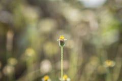 Grasblumen mit Morgensonnenlicht stockfotografie
