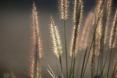 Grasblumen unter dem Sonnenlicht Stockfotos