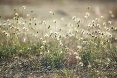 Grasblumen unter dem Sonnenlicht Lizenzfreie Stockfotos