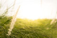 Grasblumenmorgen Stockfoto