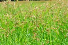 Grasblumenwiese Stockbild
