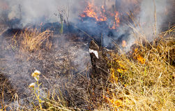 Grasbrand - Australische Bush-Brandwond weg royalty-vrije stock afbeeldingen