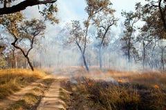 Grasbrand - Australische Bush-Brandwond weg royalty-vrije stock foto