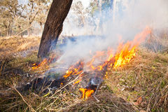 Grasbrand - Australische Bush-Brandwond weg stock foto