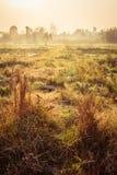 Grasfeld im Morgen Stockbilder