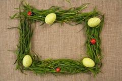 Grasfeld mit Eiern und Marienkäfern Stockbild