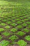 Grasfußbodenblock Stockbilder