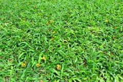 Grasgebied Stock Afbeelding