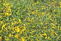 Grasgebied Stock Afbeeldingen