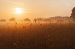 Grasgebied bij zonsopgang Stock Foto's