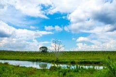 Grasgebied en blauwe hemel Stock Foto