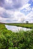 Grasgebied en blauwe hemel Stock Fotografie