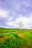 Grasgebied en blauwe hemel Royalty-vrije Stock Afbeelding
