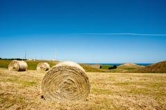 Grasgebied en overzees Royalty-vrije Stock Afbeeldingen