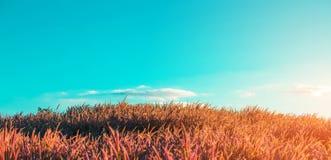 Grasgebied met hemel Royalty-vrije Stock Fotografie