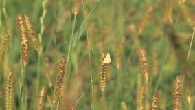 Grasgebied met mot stock footage