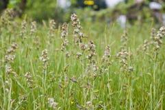 Grasgebieden royalty-vrije stock afbeelding