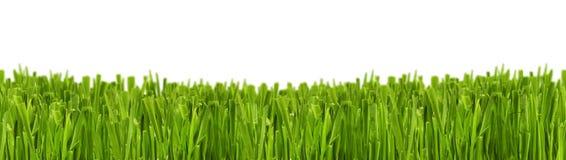 Grasgrün Stockfotos