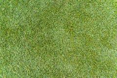 Grasgrün stockbild