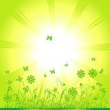Grasgrün, Sommerhintergrund stock abbildung