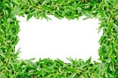 Grasgrünrahmen stockbilder