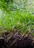 Grasgrasscholle lizenzfreie stockfotografie