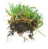 Grasgrasscholle Stockbilder