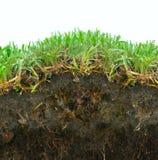 Grasgrasscholleboden Stockfotos