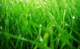 grasgreen Arkivfoton