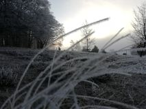 Leaves of grass in winter stock images