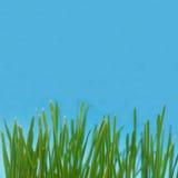 Grashintergrund Stockbilder