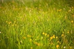 Grashintergrund, frisch und Naturrasen stockfotografie