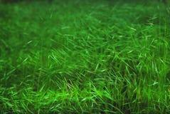 Grashintergrund-Grünwand Stockfotos