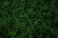 Grashintergrund, Gras Lizenzfreies Stockfoto